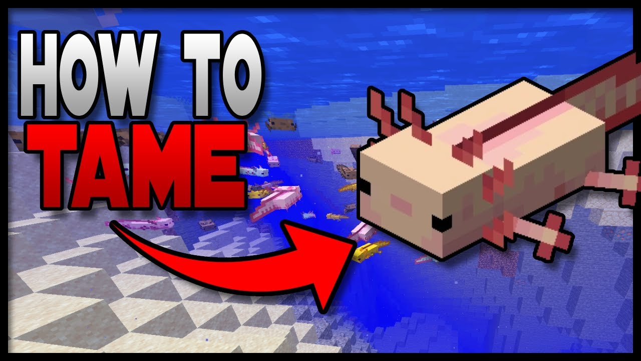 How To Catch Axolotl Minecraft {Complete Details}